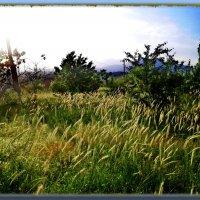Колосится трава на лугах, изумрудной волною по ветру.... :: Людмила Богданова (Скачко)