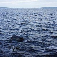 Онежская набережная. Онежское озеро :: Елена Павлова (Смолова)