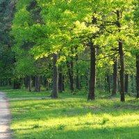 Парковский лес :: Кристина Плавская