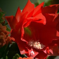 Аленький цветочек :: Валерий Лазарев