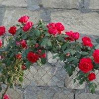 Цветущий забор :: Gudret Aghayev