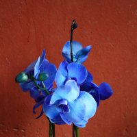 Синенький в бетонных джунглях :: ferrero s