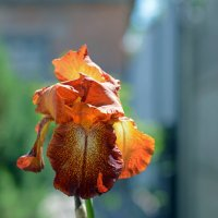 ... и цветок в подарок :: Александр Бойко