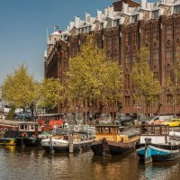 Tulips in Holland 04-2015 Amsterdam 4 :: Arturs Ancans