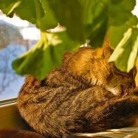 пахнет весной :: petyxov петухов