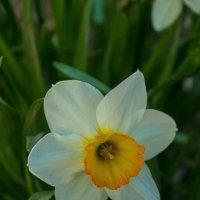 одинокий цветок :: Юлия Лукомец