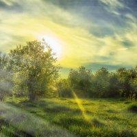 тёплое утро :: EMIL BIZYAEV