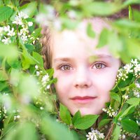 Цветет черемуха... А запах! :: Анастасия Седунова
