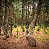 Танцующий лес :: Ольга
