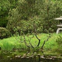 В Японском саду :: Ирина Н