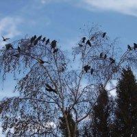 Птицы на дереве :: Денис Масленников