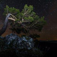 Майская ночь 2 :: Александр Хорошилов