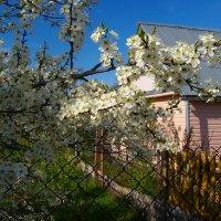 Один раз в год сады цветут :: Grey Bishop