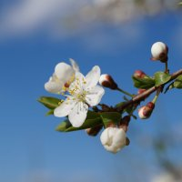 Весна 2015. :: Cerg Smith