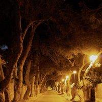 ночная аллея :: Виталий Устинов
