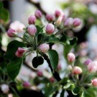Весны цветение :: Александр Яковлев