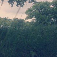 Зелёная Полянка :: Valeriya Voice