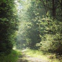 Утро в лесу :: Олег Пученков