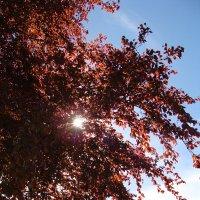 Солнышко сквозь листьев :: laana laadas