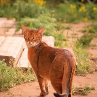 Дачный котик :: Victor Okhrimets