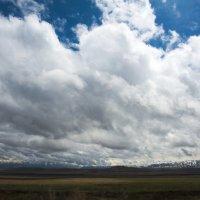 Долина Суусамыр :: Дмитрий Левин