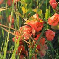 Какие-то цветочки :: Sage Ekchard