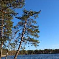 Малое Барковское озеро :: Наталья Андреева
