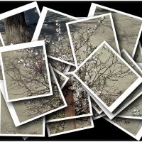 Лёгкое дыхание весны - коллаж :: Нина Корешкова