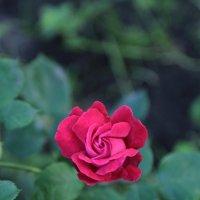 Цветочный хоровод-63. :: Руслан Грицунь