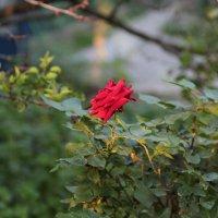 Цветочный хоровод-62. :: Руслан Грицунь