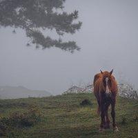 веган в тумане :: Алексей Бордуков