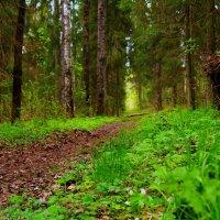 лесная дорога :: Алексей Таразанов