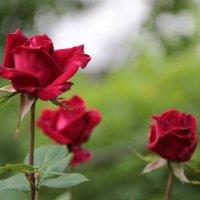 Цветочный хоровод-70. :: Руслан Грицунь