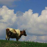 Корова и небеса :: Леонид Сергиенко