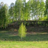 Во поле берёзонька стояла . :: Мила Бовкун
