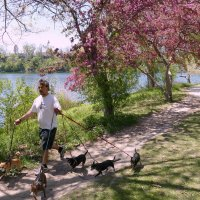 Усатый нянь в парке Торонто :: Юрий Поляков