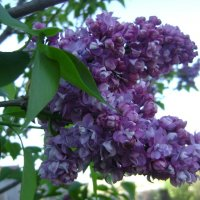 Майские цветочки. :: Анатолий