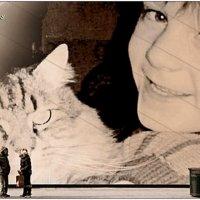 Смотрите, какой у меня кот!.. :: Кай-8 (Ярослав) Забелин