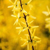 Желтое :: Zlata Tsyganok