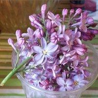Сирени девять лепестков - на счастье всем... Автор Саша. :: Фотогруппа Весна.