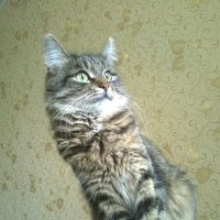 Алиса в недоумении . :: Мила Бовкун