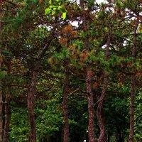 шелестят деревья в тихом парке... :: Александр Корчемный