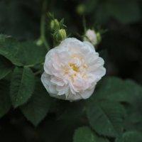 Цветочный хоровод-76. :: Руслан Грицунь