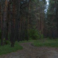 Там, на неведомых дорожках... :: Илья Костин