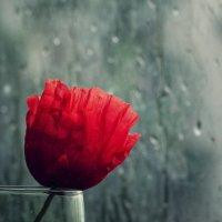 Дождь :: Ольга Мальцева