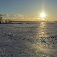 Зимнее солнце :: shvlad