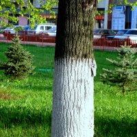 Молодёжный проспект :: Лебедев Виктор
