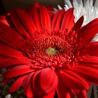 цветы на последний звонок :: сергей