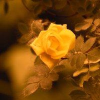 Цветок :: Владимир Марков