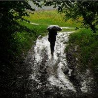А дождь идёт! :: Владимир Шошин